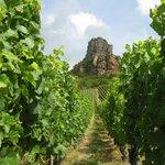 View of the Roche-de-la-Solutré from the vineyard