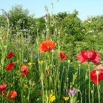 Wild Flowers in the Garden