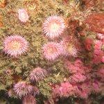 Beautiful dive sites
