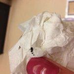 Bug found on me, Mom