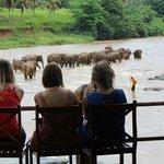 象の水浴びを見学