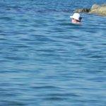 Утренний заплыв