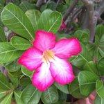 casa manana flower