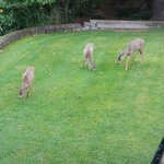 Locals on the lawn