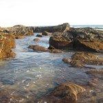 Low tide (tide pool)