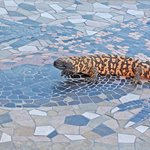 Gila Monster Mosaic by Tell Hicks