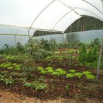Os legumes usados no restaurante são produzidos nesta horta organica