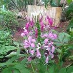 Lush plants at the Sacred Seeds tour