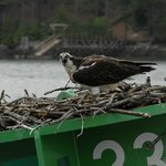 And Osprey Too!