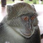 nos amis les monkeys sur la terasse