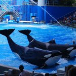 Shamu and friends