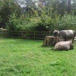 Vacas en el parque.