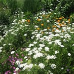 Floral border in Atlanta Botanical Garden