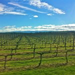 Vine yards and a beautiful day