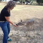 A friendly deer outside of Ms. Lily
