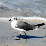 Midday beach walker