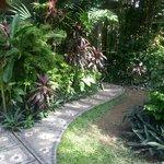 garden in front of room