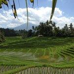 Mt Batu Karu across the rice fields