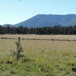 Grasslands and mountains