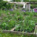 Сад Розендаль, теплицы, кафе