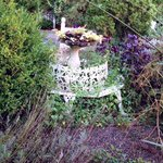 Weeds overtaking and covering garden furniture
