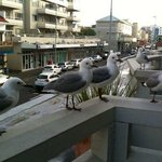 Friendly seagulls in the balcony....
