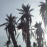 Les Palmiers le matin au lever du soleil