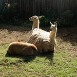 Orphanage / Zoo