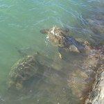 Turtle 目の前の海岸にて