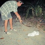 Our guide Ollie with the python he rescued and released from the middle of the road