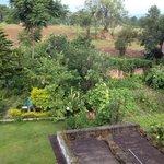 Fresh organic vegetable farm