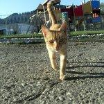 gatto&parco giochi