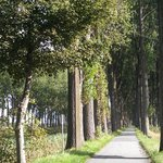 Tree-lined roads along the canals make for a pleasant ride.