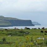 Cliffs of Moher, Doolin, Ireland ©2013 jbrock