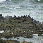 wildlife on the rocks