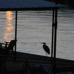 Visiting heron