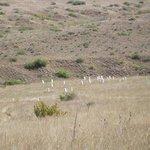 Custer's Hill