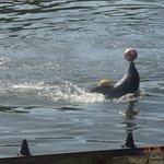 Gracias de los delfines en Varadero