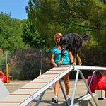 parcour d'agility camping domaine de gaujac