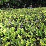 Snake in a bush.