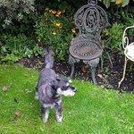 Beep in the garden