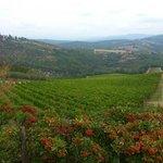 Overlooking the Verrazzano vineyard