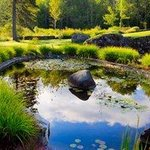 Adair Back Yard Pond