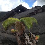 Hike with new growth on volcano bed