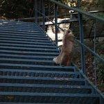 A escadaria para chegar no final da cachoeira tinha muitos animais!