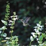 Magical September Hummingbird!