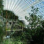 ocean2 (inside biosphere)