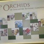 entrada al jardín de orquideas