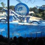 Apresentação das baleias