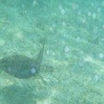 Snorkel com tartarugas